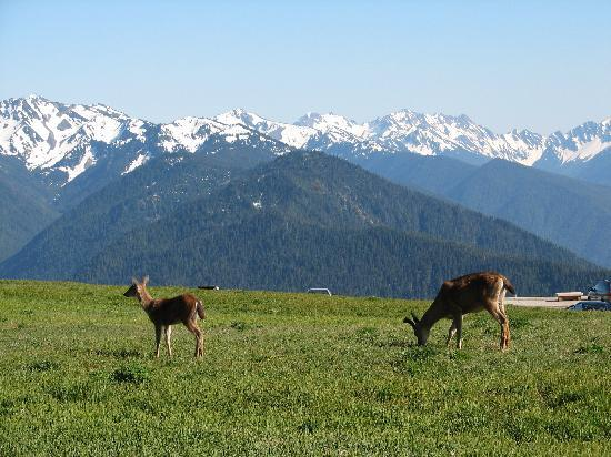 hurricane-ridge